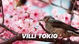 Villi Tokio