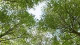Kaipaatko kesämökille persoonallista ilmettä – ja vielä ekologisesti? Ratkaisu voi löytyä omasta pihasta!
