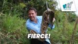 Fierce!