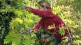 """Farmi Suomen puunkaatotehtävässä vaaratilanteita – puu kaatuu väärään suuntaan, runko osuu Katja Kätkään: """"Kuuluu kauhea kumaus"""""""