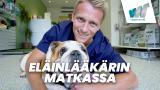 Eläinlääkärin matkassa