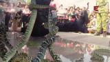 10 - Malesian myrkkykäärmeet