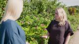 Tunnistatko pihan kauhukasvin? Hävitettäväksi määrätty kurtturuusu sekoitetaan helposti puutarhan viattomaan kaunottareen