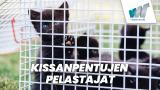 Kissanpentujen pelastajat