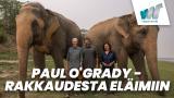 Paul O'Grady - rakkaudesta eläimiin
