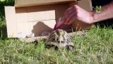 4 - Kilpikonnan varvasfetissi