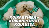 Koiraryhmä - koiranpennut koulussa